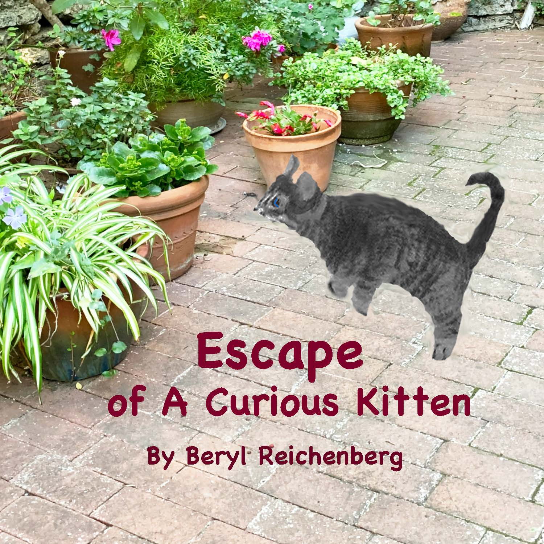 Escape of A Curious Kitten